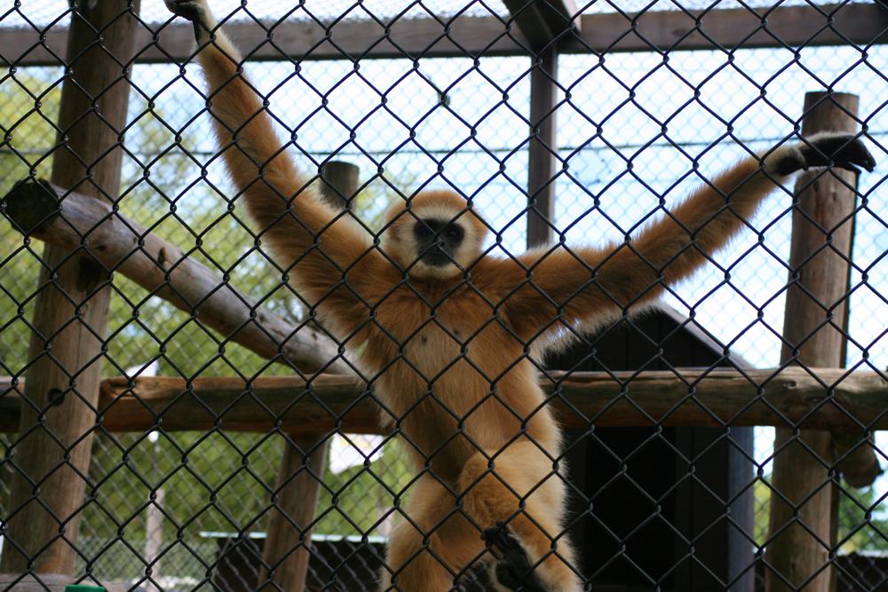 Monkey York's Wild Kingdom